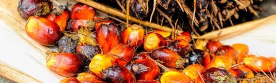 Aceite de palma – ¿Es tan perjudicial?